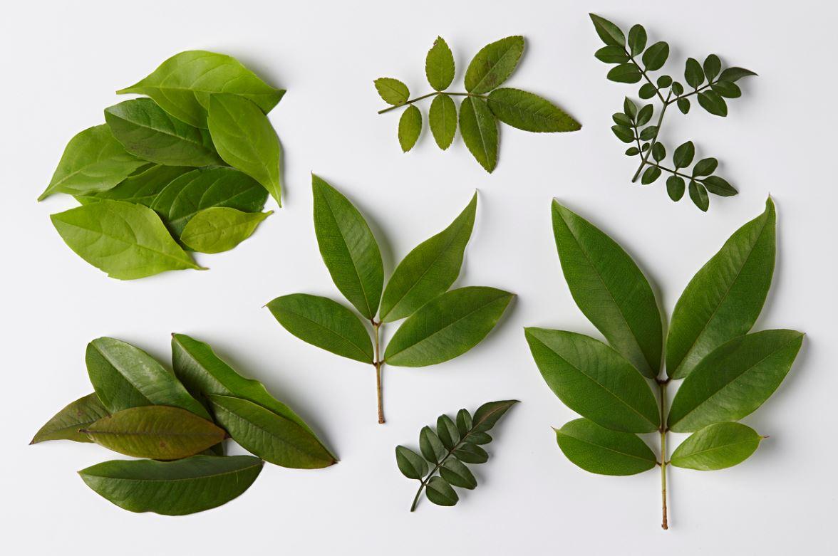Indoor Plants Leaves