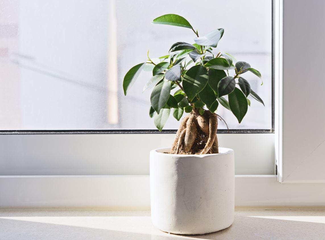 Plants Indoor Air