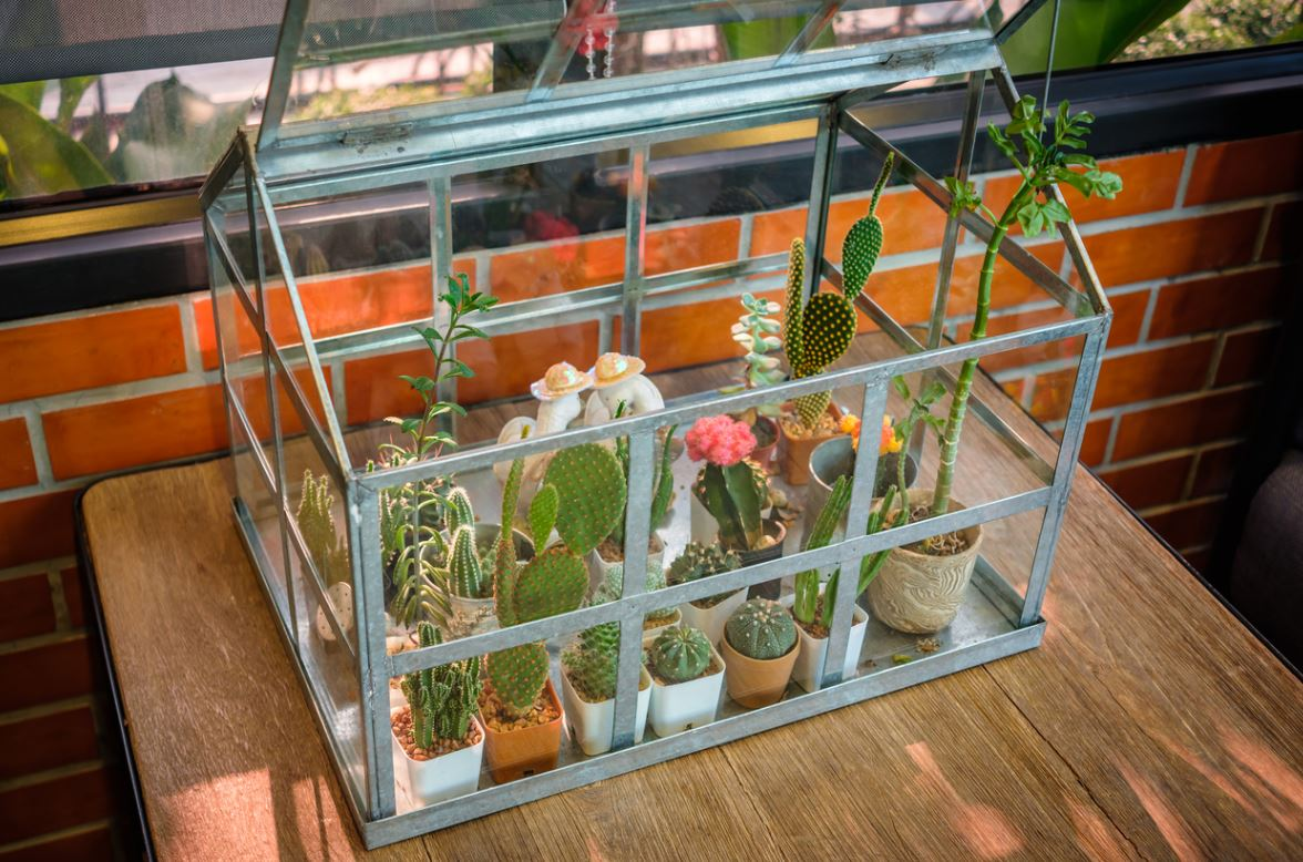 Mini Greenhouse Indoor Plant