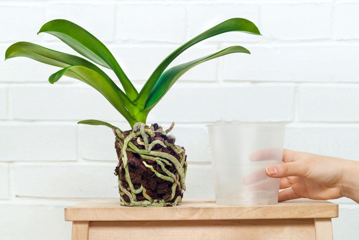 Houseplant Repot