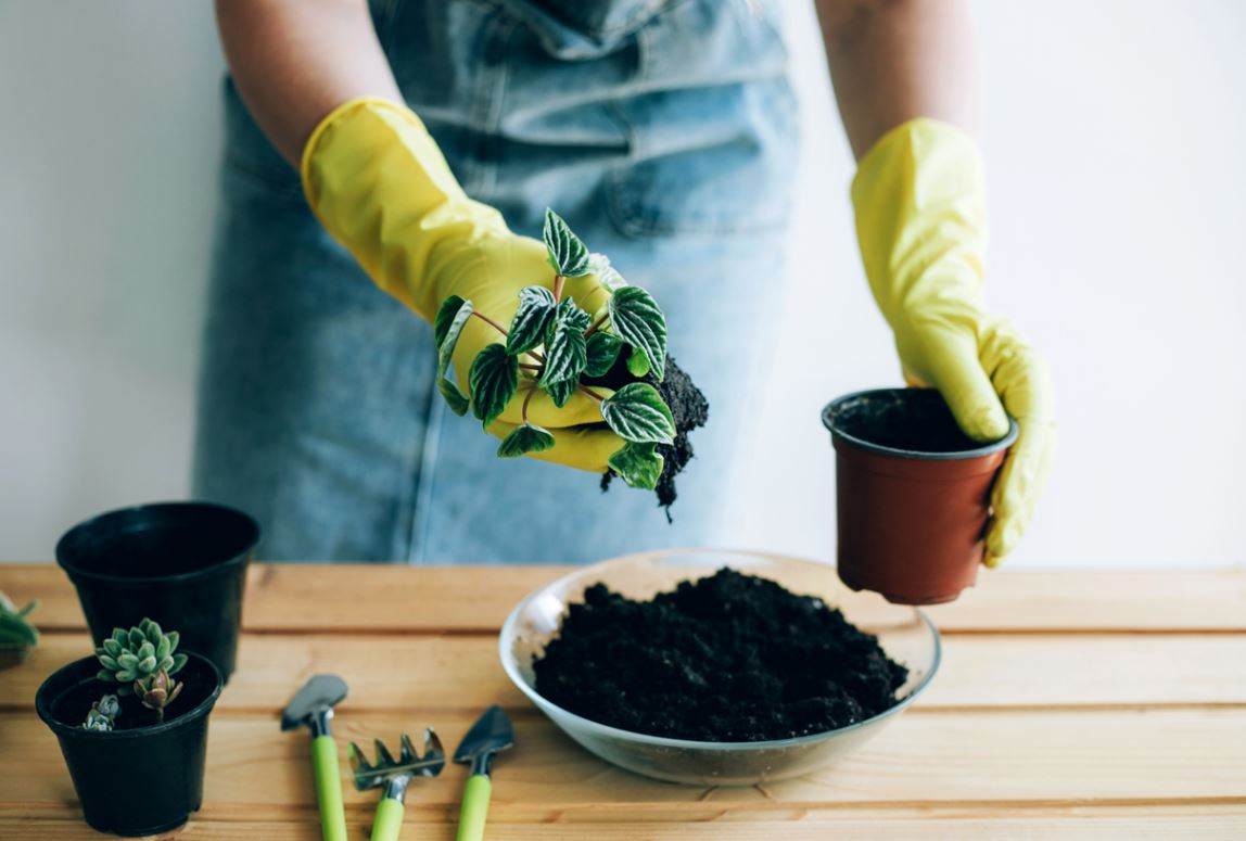 Potted Plant Soil