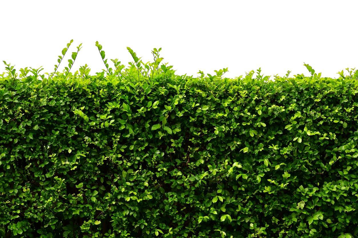haie clôture décoration jardin